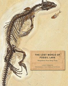 Compiled by an ardent bibliophile, this week's report includes Penguins: Natural History and Conservation; A Love Affair with Birds: The Life of Thomas Sadler Roberts; The Lost World of Fossil Lake: Snapshots from Deep Time; and Rhinoceros Giants: The Paleobiology of Indricotheres; all of which were recently published in North America and the UK