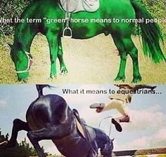 "Lol. Yep. Whenever you say ""green horse"" to a non equestrian you know that this is what comes up in their head."