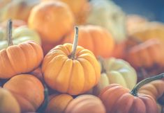 """What you plant now you will harvest later."""" -Og Mandino by york_wallcoverings Ayurvedic Diet, Ayurvedic Recipes, Oven Dishes, Go For It, Mini Pumpkins, Pumpkin Recipes, Clean Eating, Food And Drink, Lunch"""