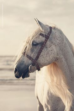 Kinda looks like my old boy. All The Pretty Horses, Beautiful Horses, Animals Beautiful, Cute Animals, All About Horses, Majestic Horse, Tier Fotos, Equine Photography, Horse Pictures