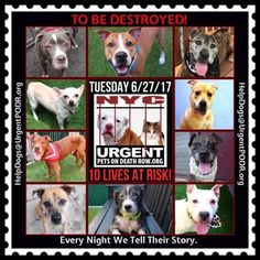 TO BE DESTROYED 06/27/17 - - Info   To rescue a Death Row Dog, Please read this:http://information.urgentpodr.org/adoption-info-and-list-of-rescues/  To view the full album, please click here:http://nycdogs.urgentpodr.org/tbd-dogs-page/ -  Click for info & Current Status: http://nycdogs.urgentpodr.org/to-be-destroyed-4915/