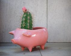 Elephant planter ceramic succulent planter by claylicious on Etsy