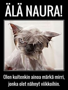 Finnish Language, Sarcasm, Minions, Cats And Kittens, Funny Animals, Lol, Words, Memes, Photography