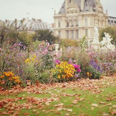 Tuileries Gardens, Paris (by liz.rusby) .Used to pass by here at least three times a week when I lived in Paris. OY. What a dream that was.