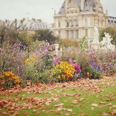 Tuileries, Paris (by liz.rusby)