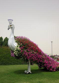 Dubai Miracle Garden..
