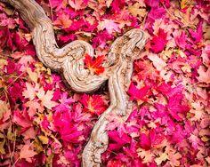 Aeon jones photography  - Fall colors embrace Zion National Park