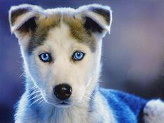 i'm gonna name mine's Blue.