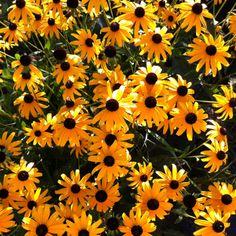 Sunny, happy flowers!