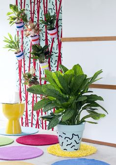 Houseplant of the Month - Chinese Evergreen | Flowerona