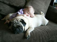 babies and pugs! babies and pugs! Amor Pug, Animals For Kids, Baby Animals, Cute Animals, Animals Images, Pug Love, I Love Dogs, Raza Pug, Animal Pictures