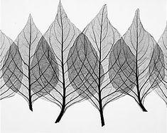 X-Ray Art- complex simplicity