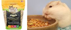 Hamster's love variety as long as their basic diet of specialised food stays the same, and their are tons of different things you can add to their diet to spice it up. Dwarf Hamster Food, Spice Things Up, Pets, Animals, Animales, Animaux, Animal, Animais, Animals And Pets