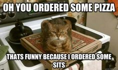 """Cat: """"Oh, you ordered some pizza? That's funny because I ordered some sits."""""""