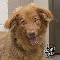 Adopt A Pet :: Marshall - Troy, OH