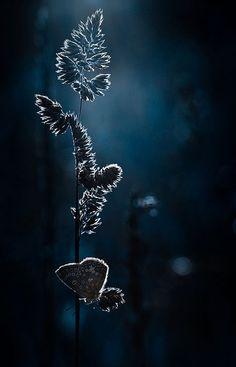 Sultry, deep, mysterious = Midnight Indigo. Experience salt air over jasmine…