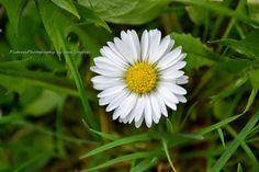 Photo And Video, Flowers, Blog, Photography, Photograph, Florals, Fotografie, Photo Shoot, Fotografia