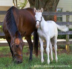 White Bliss, or the 1-in-200,000 white Standardbred colt