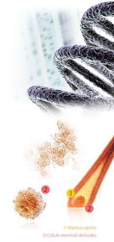 Cura Calvizie, Soluzione Avanzata della perdita dei capelli. FASE 2 > 5 - L'azione sinergica della Rigenerazione Cellulare è concentrata in una sola sessione ad alta densità ed è la base del risultato! FASE 2 - bActiveCell e stimolazione Matrice Extracellulare. FASE 3 - HairPhoresis. FASE 4 - YourLife Test DNA e Profilo Lipidomico. FASE 5 - NutraLife Nutrigenomica. Terapia di follow-Up ad-personam. Non esiste una sola calvizie esiste la tua calvizie. Vai su HairClinic.it