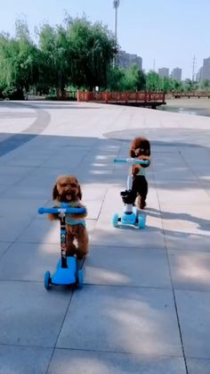 smart dog Look at these images of dogs in some of the most unimaginable positions and situations. Get a laugh. Cute Funny Animals, Cute Baby Animals, Animals And Pets, Cute Cats, Cute Animal Videos, Funny Animal Pictures, Funny Dog Videos, Funny Dogs, Cute Creatures