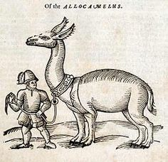 In heraldry, the allocamelus, or ass-camel, was the depiction of a mythical creature with the head of a donkey and body of a camel; it is the legendary representation of the llama. It was first used as a crest for the English Eastland Company, and later by the Russia Company.
