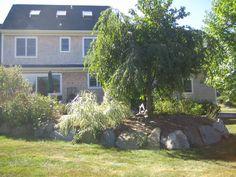 freeborn back Spaces, Plants, Flora, Plant, Planting
