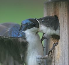 Funny Wildlife, It started out with a kiss. How did it end up like...