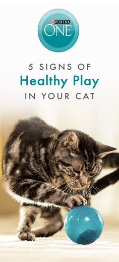 """When cats play it's a sign they're feeling good on the inside and getting the nutrition they need for each life stage. The 100% nutrition of Purina ONE Tender Selects Blend With Real Chicken helps play an important role in how your adult cat looks and feels. Purposeful play can help exercise your cat and create a strong bond between you both. Cats that feel friendly and playful might """"act silly"""" and roll belly-up. Give your cat the food she's been waiting for, buy a bag in-store today."""