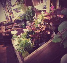 Twigs Market: like them on fb!