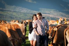 Our farm engagement shoot with the cattle in the background - photos by Christelle Rall Photography Engagement Pictures, Engagement Shoots, Cattle Farming, Everlasting Love, Couple Photos, Cute, Photography, Wedding, Ideas