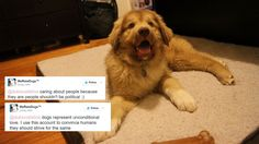 WeRateDogs Twitter combats Muslim ban with 'unconditional love' Image:  Adam Rosenberg/Mashable  By Adam Rosenberg2017-01-29 16:54:13 UTC  The @dog_rates Twitter account is protesting Donald Trumps #MuslimBan with adorable photos (naturally) and messages of love.  It started innocently enough on Saturday during widespread airport protests railing against the Trump administrations immigration ban  which affects an outsized proportion of Muslims. The WeRateDogs account shared a photo of a cute…