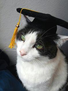Graduation Cat - Cute Cats in Hats