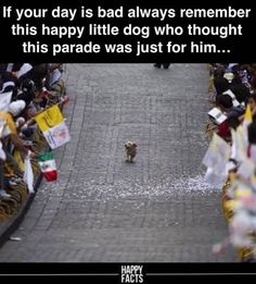 laugh out loud. 18 Hilarious Animal Memes That Are Nothing But Funny - Funny Animals - Daily LOL Pics Animal Jokes, Funny Animal Memes, Dog Memes, Funny Animal Pictures, Funny Dogs, Funny Memes, Animal Captions, Humorous Cats, Meme Pictures