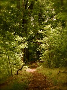 Treasure Trail, Tanglewood Park, Clemmons, NC