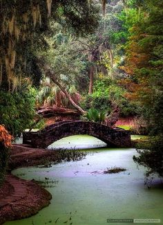 19 Most Beautiful Places to Visit in Louisiana - The Crazy Tourist Mississippi, Vacation Destinations, Vacation Spots, Holiday Destinations, Louisiana Homes, Louisiana Bayou, Louisiana Facts, Grand Isle Louisiana, Baton Rouge Louisiana