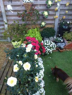 Mijn eigen hoekje gemaakt in mijn tuin