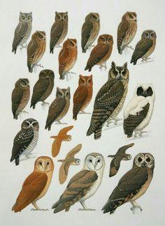 Animal Plates, Reptiles And Amphibians, Bird Pictures, Owl Art, Wild Ones, Birds Of Prey, Wildlife Art, Bird Feathers, Beautiful Birds