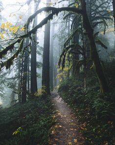 New wild nature landscape wanderlust Ideas Forest Photography, Adventure Photography, Landscape Photography, Travel Photography, Film Photography, Photography Articles, Mountain Photography, Wildlife Photography, Photography Ideas
