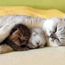Mom and kittens  Motherhood, a Skill that knows no boundaries