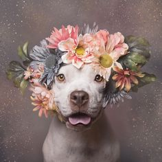 These beautiful portrait could find 600 foster homes for these poor being culled doggies!!  殺処分予定の犬が「お花」と一緒に写真を撮ったら・・・600匹以上の里親が見つかる! | TABI LABO