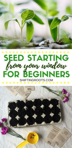 Learn how to start vegetable and flower seeds right from your window! I've compiled some easy seed starting tips for the beginner gardener to have you growing plants in your home using DIY containers. No need for fancy equipment! #gardening #seedstarting #seeds #vegetable #flower #fromyourwindow #diy #beginnergardener #easy via @shifting_roots