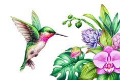 Ideas Humming Bird Doodle Coloring Pages For 2019 Bird Tattoo Back, Black Bird Tattoo, Gray Tattoo, Black Tattoos, Hummingbird Painting, Hummingbird Tattoo, Illustration Au Crayon, Watercolor Illustration, Bird Drawings