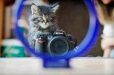 Photography Cat :))