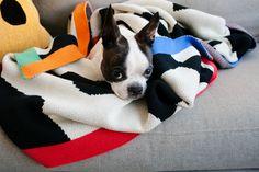 Beautiful patterns surround a cute French Bulldog