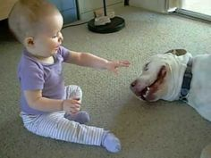 9 month old baby plays with Pit Bull. Lover dog- not a mean bone in his body!