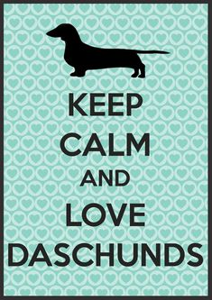 Funny dachshunds isn't even spelled right but I'll repost anyways of course :) #dachshund