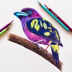 Banded Broadbill - or the Marmite bird. By Sallyann Pencil Drawings Of Animals, Bird Drawings, Colorful Drawings, Cute Drawings, Drawing Animals, Colored Pencil Artwork, Color Pencil Art, Colored Pencils, Feather Drawing