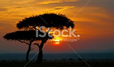 typical sunset in africa Royalty Free Stock Photo