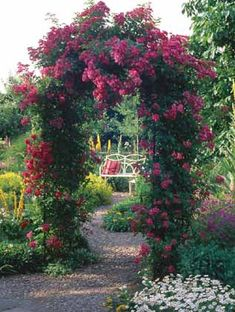 roses covering an arch