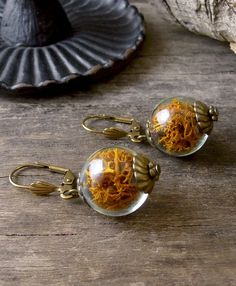 Terrarium earrings, Real moss earrings, Ochre earrings, Glass ball earrings, Reindeer moss jewelry, True nature jewelry, Woodland earrings